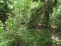 Snedväxande träd.jpg
