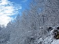 Snow from Winter Storm Skylar (12 March 2018) (near Frenchburg, Menifee County, Kentucky, USA) 2.jpg