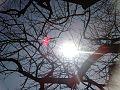 Sol entre galhos - Belo Horizonte - MG.jpg