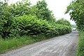 Something Nasty in the Hedge, near Essington, Staffordshire - geograph.org.uk - 458603.jpg