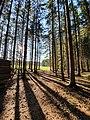 Sonneneinstrahlung in Wald 6146421054.jpg