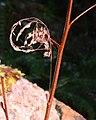 Spider (14a5162e6e3542b6bad54510af174d7a).JPG