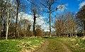 Spring at Clandeboye (1) - geograph.org.uk - 754181.jpg