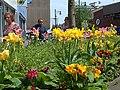 Spring flowers, Oldham - geograph.org.uk - 799732.jpg