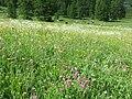 St. Moritz Hike-51 (9709762974).jpg