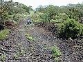 Starr-020422-0064-Nicotiana glauca-fenceline road-Puu o Kali-Maui (24180661889).jpg
