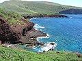 Starr-060406-7283-Senna gaudichaudii-on main island-Puu Pehe-Lanai (24860853505).jpg