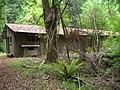 Starr-090521-9241-Fraxinus uhdei-habit with old CCC cabin-Polipoli-Maui (24661166910).jpg