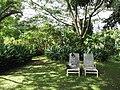 Starr-110330-4046-Strelitzia reginae-habitat with Kim-Garden of Eden Keanae-Maui (25081160625).jpg