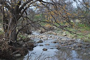 Little River (Greater Geelong) - Little River, near its source in Staughton Vale