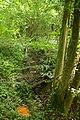 Steenbergse bossen 16.jpg