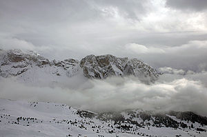 English: Snow on Stevia in Val Gardena