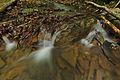 Stužická rieka, Národná prírodná rezervácia Stužica, Národný park Poloniny (06).jpg