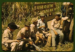 Plantation economy - Sugar cane workers in Puerto Rico, 1941
