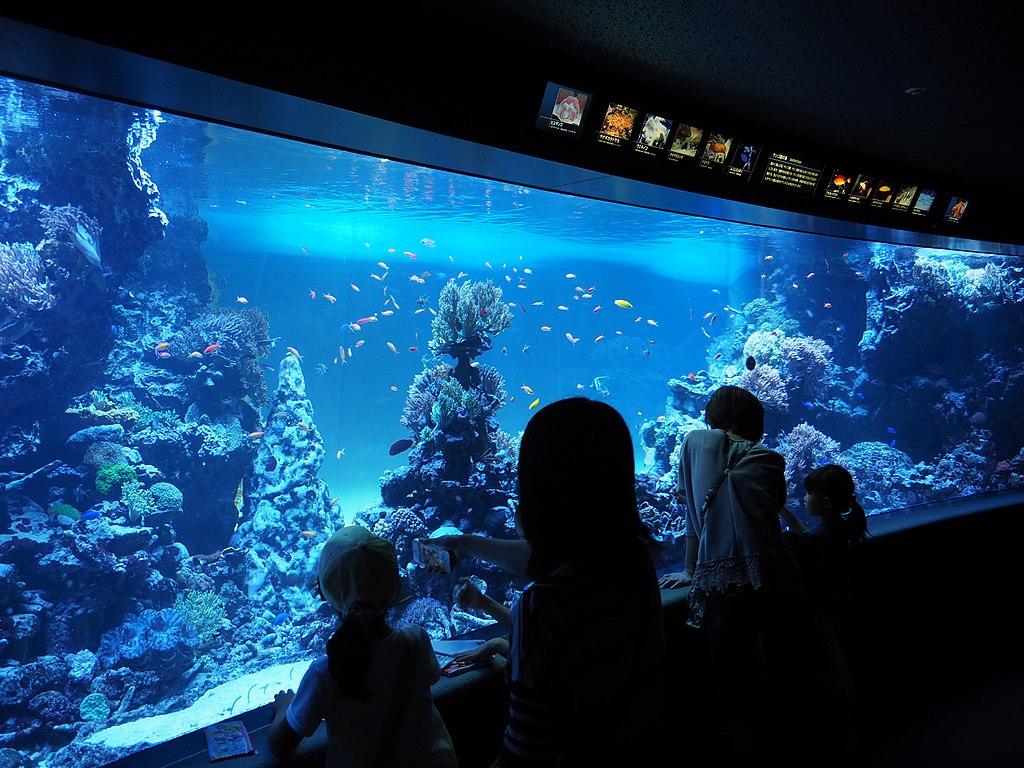 Sunshine Aquarium 01