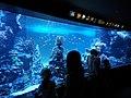 Sunshine Aquarium 01.jpg