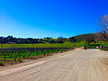 Sunstone-Vineyards-in-Santa-Ynez-Valley-Winetour-Visit-American-Luxury-Limousine-2015.jpg