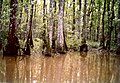 Swamp Tour Louisiana March 1991 02.jpg