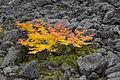 Table Rocks Wilderness (9503281926).jpg
