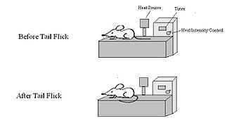 Tail flick test - Tail flick test apparatus