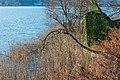 Techelsberg Saag Uferbereich mit Schilf 24122019 7336.jpg