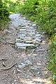 Techelsberg Tibitsch Wanderweg um den Forstsee 08072012 455.jpg
