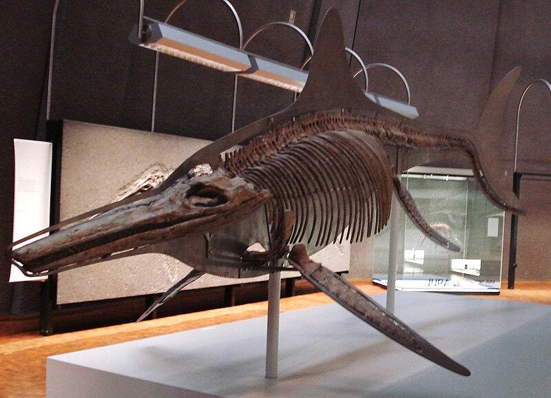 """""""Kraken"""" Found? - Fossils Point to a Giant, Ichthyosaur ...  """"Kraken"""" Fo..."""