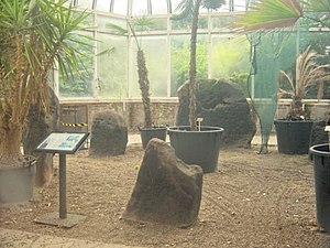 History of Liverpool - The ancient neolithic Calder Stones on display in the Harthill Greenhouses