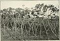 The Cuba review (1914) (14764644665).jpg