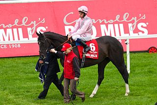 The Fugue British-bred Thoroughbred racehorse