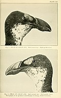The aquatic birds of Great Britain and Ireland (1906) (14569134937).jpg
