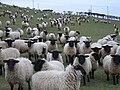 The hillside above Starveall Farm - geograph.org.uk - 129853.jpg