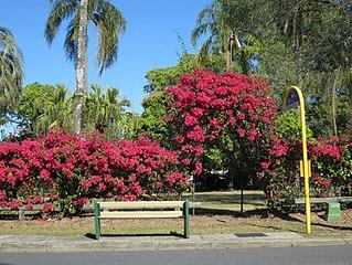 Thomas Park Bougainvillea Gardens