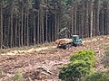 Timber harvesting above Lough Navar - geograph.org.uk - 1390948.jpg