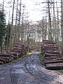 Timber stacks, Hawkshaw Gill Wood - geograph.org.uk - 651769.jpg