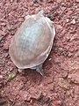 Tortoise123.jpg