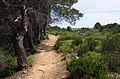 Trail, Pinet, Hérault 02.jpg