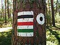 Trails in Bory Tucholskie National Park (7).jpg