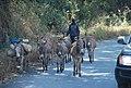 Transport dans la ville de Garoua3.jpg