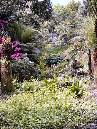 Flora and fauna of Cornwall - Some of the plants in Trebah garden