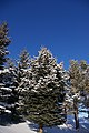 Trees (3132544134).jpg