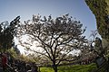 Trees (40963450552).jpg