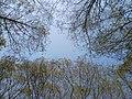Trees at Shivapuri National Park1.jpg