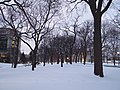 Trees in the Snow (6779788381).jpg