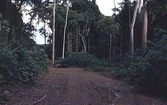 Deforestation in the Democratic Republic of the Congo - A typical logging road in Africa.