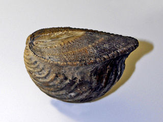 genus of molluscs (fossil)