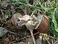 Two snails.JPG