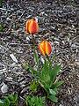 Twoflowers.jpg