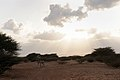 US Navy 100119-F-3745E-145 A donkey walks through the African savanna in the Republic of Djibouti.jpg