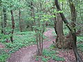 Unofficial footpath in Court Wood - geograph.org.uk - 1243232.jpg